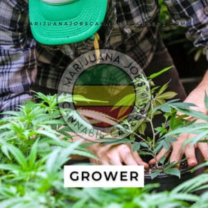 Grower Job Board Search on Marijuana Jobs Cannabis Careers