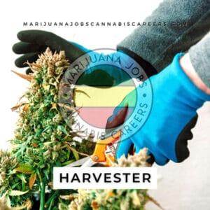 Harvester 420 Job Board Search on Marijuana Jobs Cannabis Careers