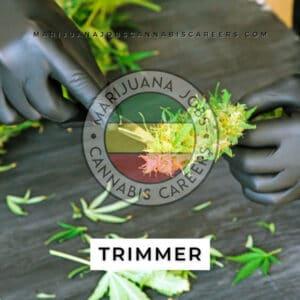 Trimmer 420 Job Board Search on Marijuana Jobs Cannabis Careers
